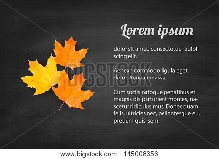 Autumn background with realistic autumn maple leaves on blackboard. Vector back to school chalkboard banner