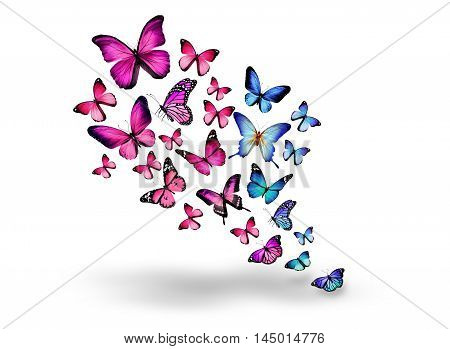 animals bokeh butterflies butterfly insects White background  illustration