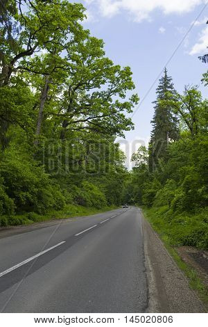 Asphalt Forest road In the summer time.
