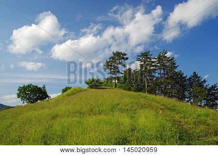 Pine tree on the hill and blue sky