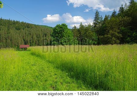 Summer landscape: green grass and path near forest.
