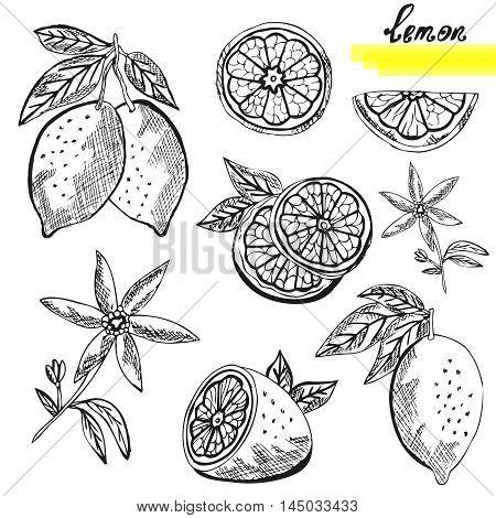 Lemon Fruits Set