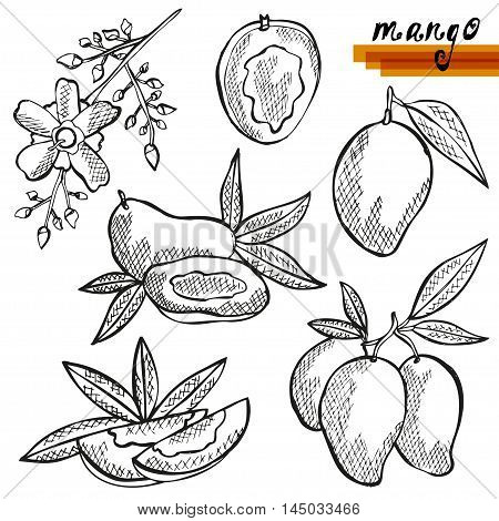Mango Fruits Set