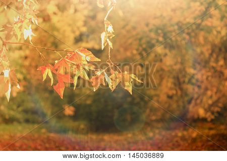 Beautiful autumnal leaves lit by sun light - beautiful autumn afternoon