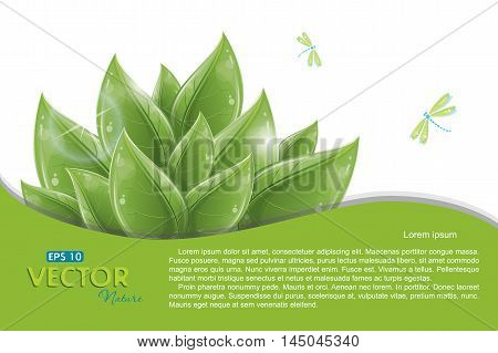 Green leaves and flying dragonflies isolated on white, vector illustration, eps-10