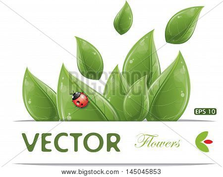 Green leaves design with ladybug isolated on white, vector illustration, eps-10