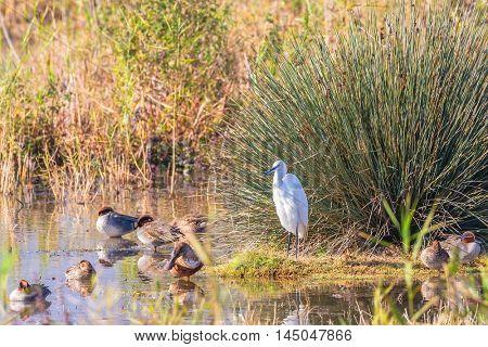 Upper Galilee, Israel. Fantastic winter dawn at Lake Hula. Migratory gray cranes wintering on the lake