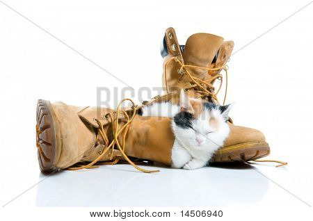 Adorable little kitten sleeping inside a pair of boots isolated on white background