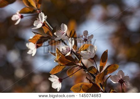 Tree Branch Spring Garden Nature Blossom Impression