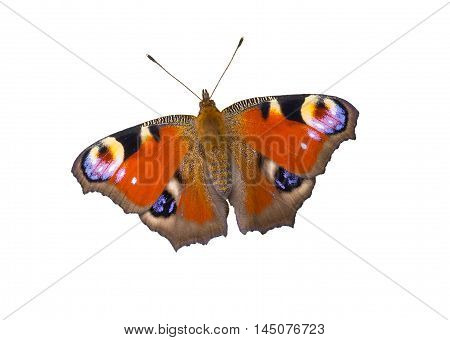 European Peacock butterfly isolated on white background