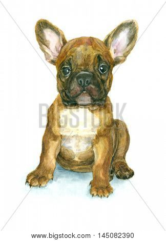 Watercolor French Bulldog puppy on white background