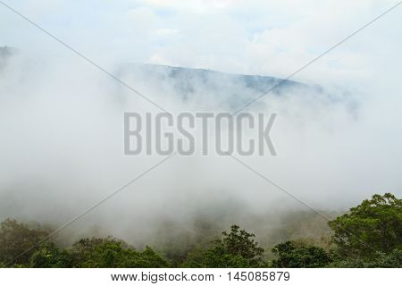 Mist in the forest at Khao Yai national park (a unesco world heritage site) Thailand.