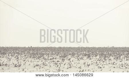 Snowy soft light background. Winter steppe plain.