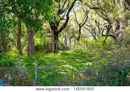 fern and tree in a Sardinian forest Italy