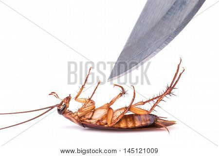 Cockroach And Knife Isolated On A White Background : Killing Cockroach Concept
