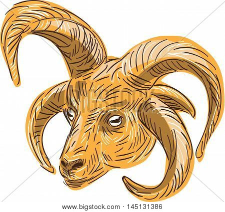 Drawing sketch style illustration of a head of a Manx Loaghtan Loaghtyn or Loghtan a breed of sheep (Ovis aries) native to the Isle of Man that have dark brown wool and usually four or occasionally six horns set on isolated white background.