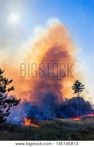 Wind blowing on a flaming trees during a forest fire