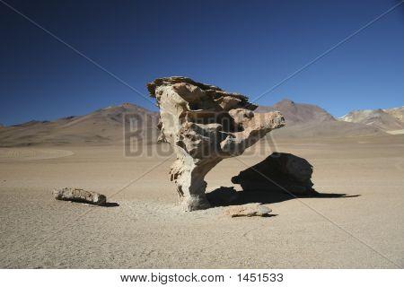 Rock Tree, Potosi, Bolivia