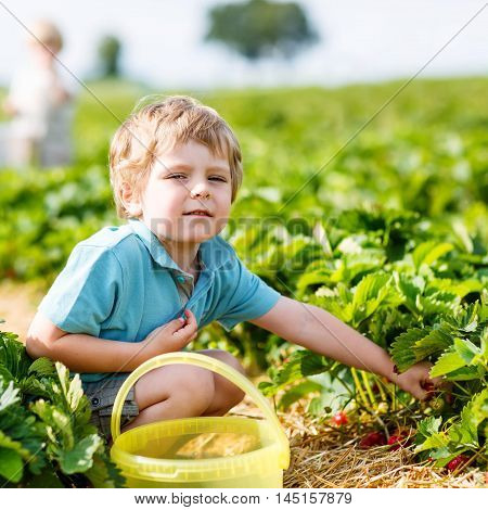 Beautiful little toddler kid boy picking and eating strawberries on organic pick a berry farm in summer, on warm sunny day. Harvest fields. Healthy food for children. Gardening and farming concept