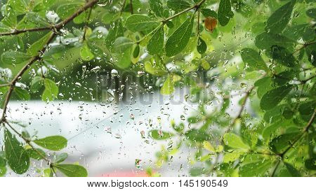 Green Leaves Background, Water Droplets On Glass Window