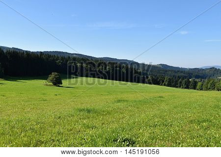 Mountain meadow on a sunny day. Landscape.