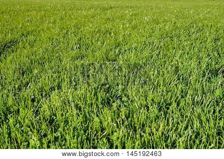 Perfect Green Grass Lawn Photo