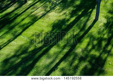 Shadows Of Tree Branches  Lie Over The Green Lawn