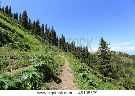 closeup of hiking trail on mountain peak