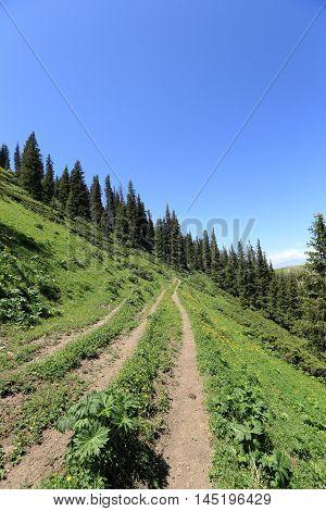 closeup of hiking trail on mountain peak