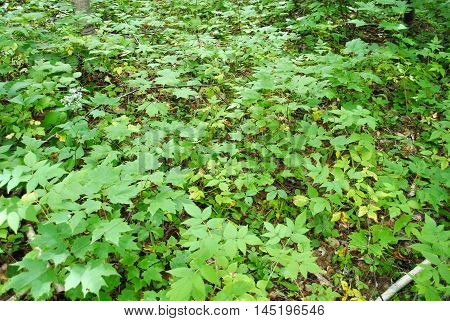 Green Forest Ground Cover as a Background
