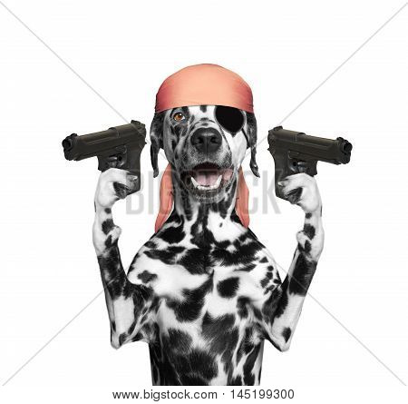 dog in a pirate costume holding guns -- isolated on white