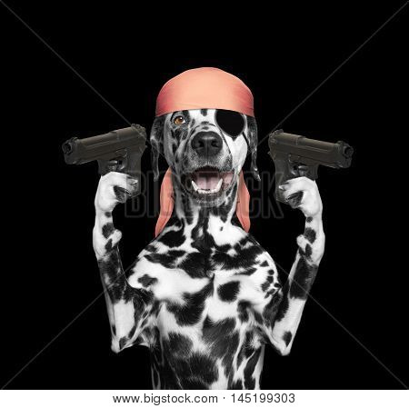 dog in a pirate costume holding guns -- isolated on black