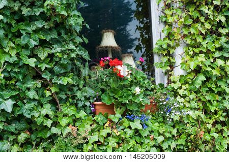 White old wooden window covered with ivy leave