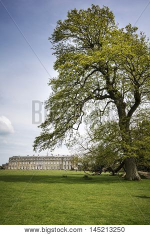 Large tree overlooks the famous Grade 1 listed country Petworth house