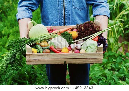 The farmer holds in his hands a wooden box with a crop of vegetables and harvest of root on the background of the garden. Natural and organic food.