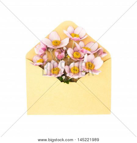 flowers in the envelope. isolated on a white background. love letter. spring flowers.