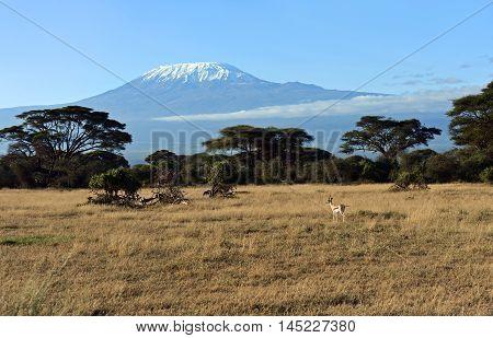 Antelope Grant In Kenya