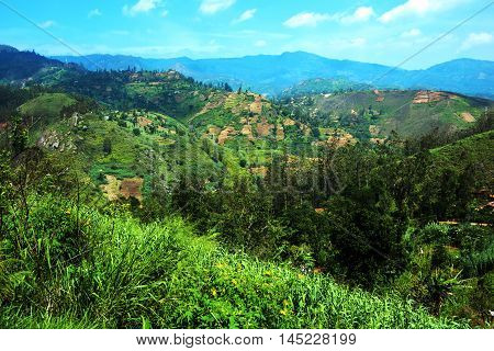 Tea Plantations In Sri Lank