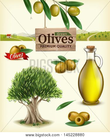Realistic vector illustration of fruit olives olive oil olive branch olive tree olive farm. Label of green olives with realistic olive branch against the backdrop of olive plantations