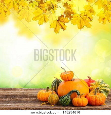 orange raw pumpkins with fall leaves on wooden table with fall garden background