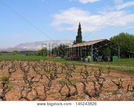 Vineyard in Provence in the south of France