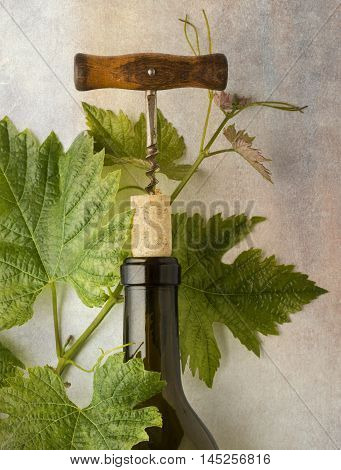 Wine Bottle Still Life