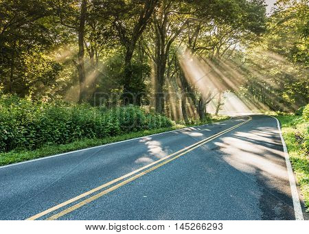 Shafts of Light in Fog on Country Road through forest
