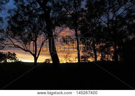 A golden sunrise dawning in the Australian bush