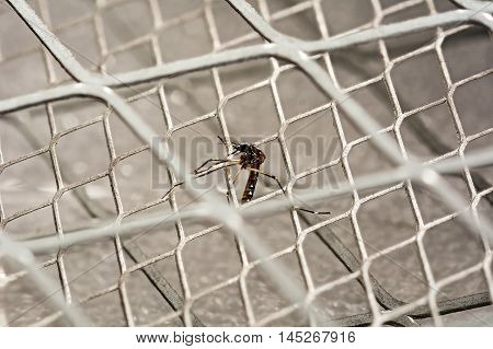 Closeup of mosquito dead on electric mosquito swatter