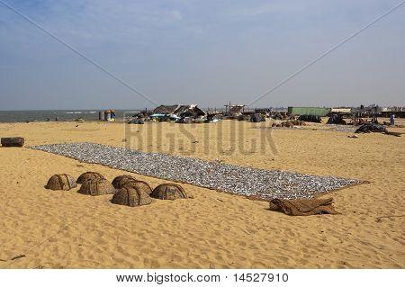 Negombo Beach Scene