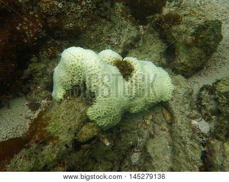 Massive coral bleaching and warmer sea temperature