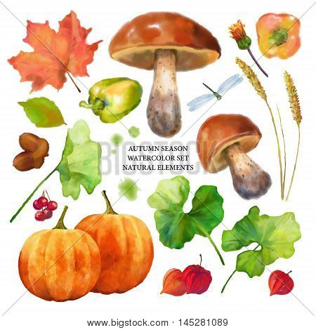 Autumn watercolor collection of fall leaves and nature elements on white background