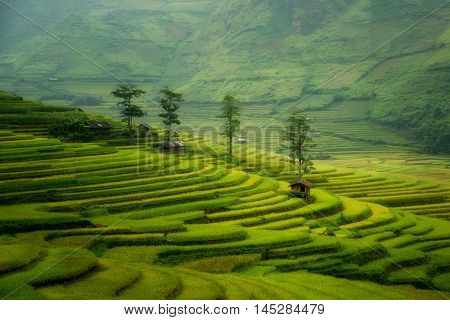 Rice fields on terraced of Mu Cang Chai YenBai Vietnam. Rice fields prepare the harvest at Vietnam. Vietnam landscapes.