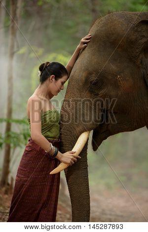 beautiful girl with smiling elephant elephant village Surin Thailand